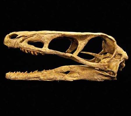 Raptor Skull copy