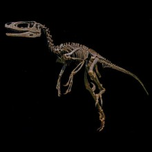 dakotaraptor-mus-store-copy