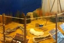 Camp Dig Pit