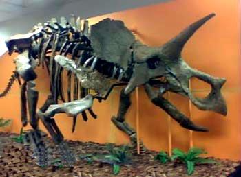 triceratops, dinosaur, exhibit