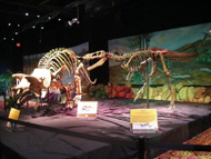 Dinoshore 190