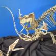 Raptor Kill
