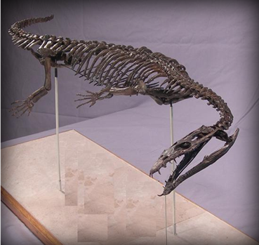 Nothosaur 3