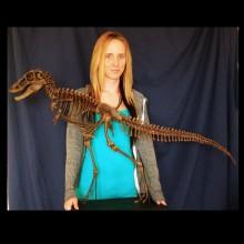 juvenile-t-rex-full-skeleton-w-bgrd