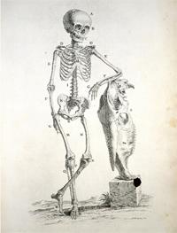 Skeleton 200