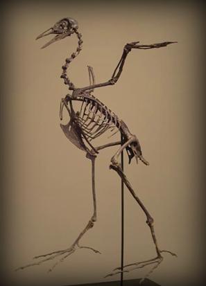 Paleontology Field Research